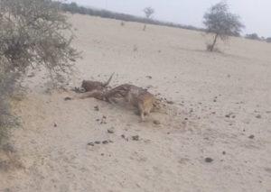 Photo 3 et 4 : Quelques cas de mortalités enregistrées autour de la réserve de Gadabedji (en zone pastorale